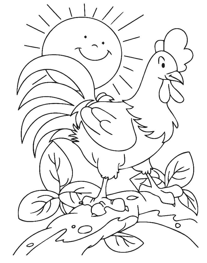 Kogut kolorowanka dla dzieci