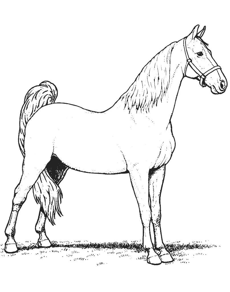 Koń darmowa kolorowanka dla dzieci