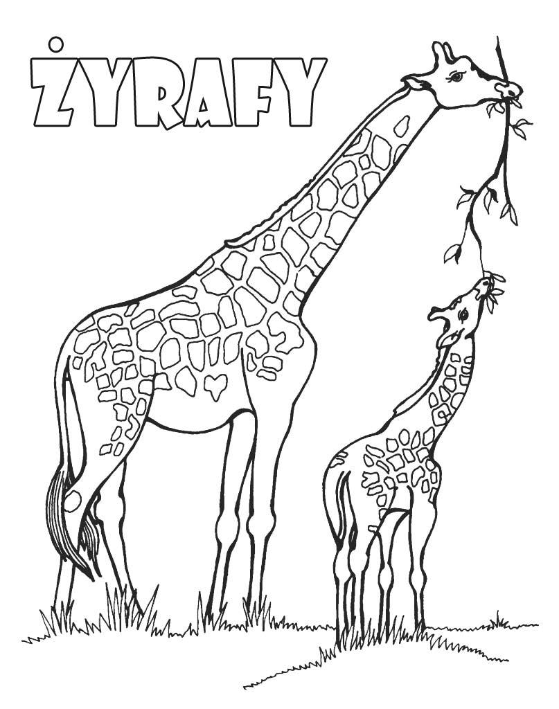 Żyrafy kolorowanka do wydruku dla dzieci