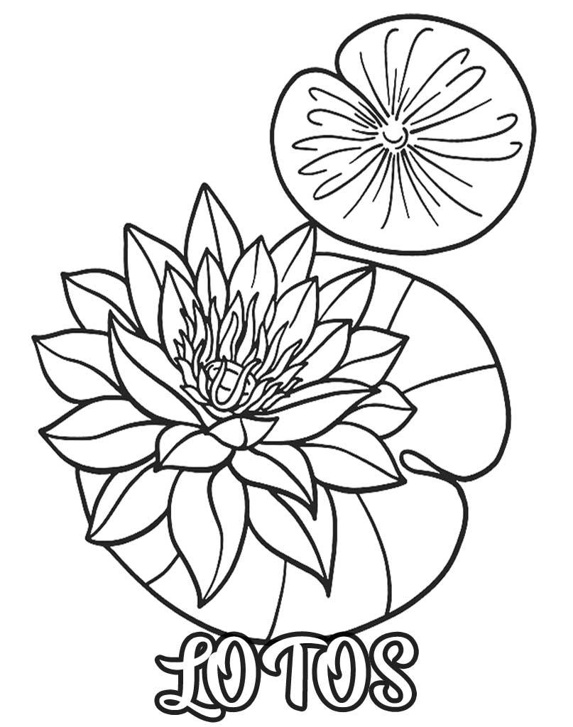 Kwiat lotosu kolorowanka do wydrukowania