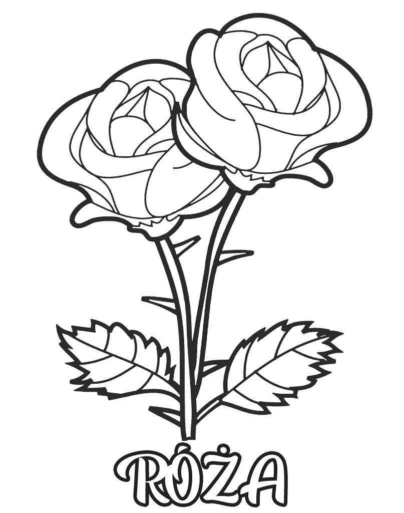 Róża kolorowanka do wydruku