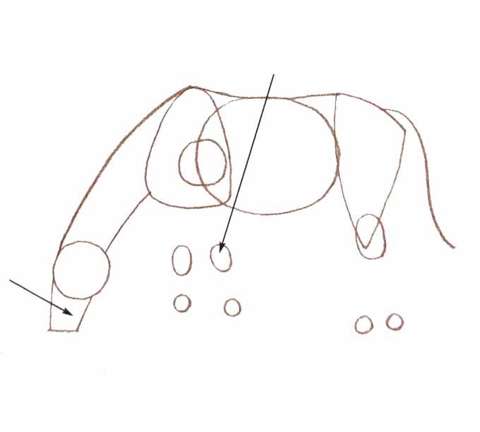 4 Rysowanie konia