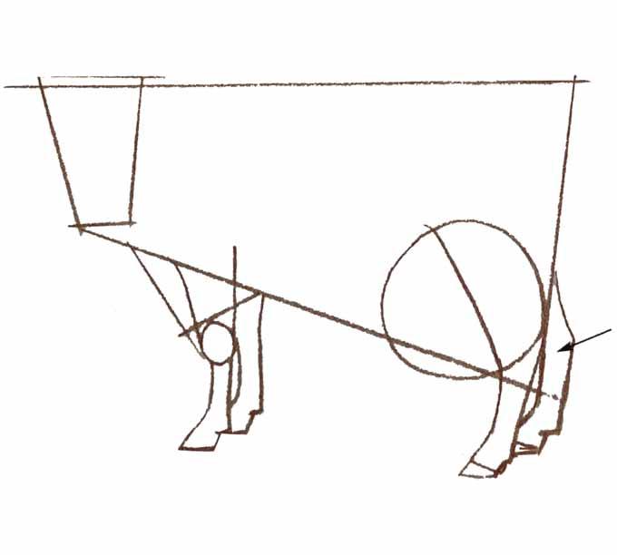 4 Rysowanie krowy