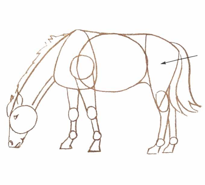 5 Rysowanie konia
