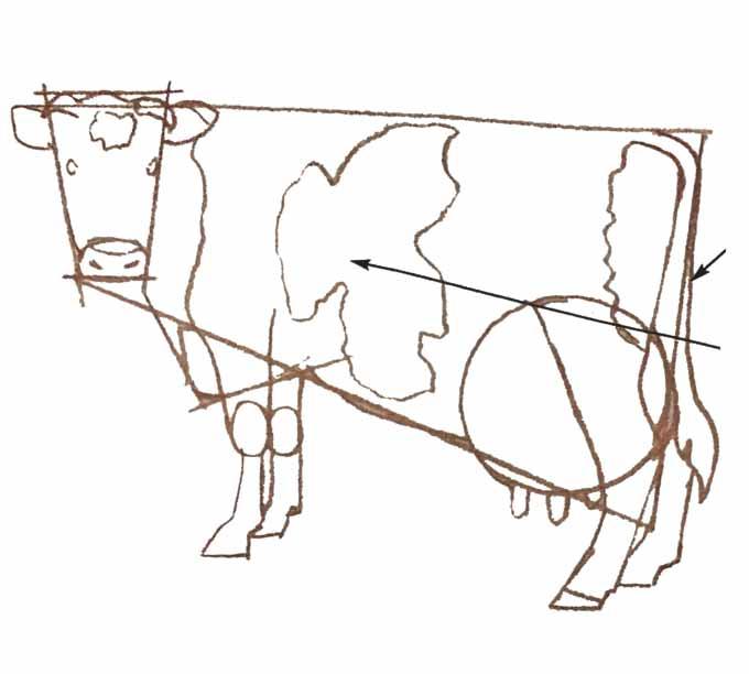 5 Rysowanie krowy