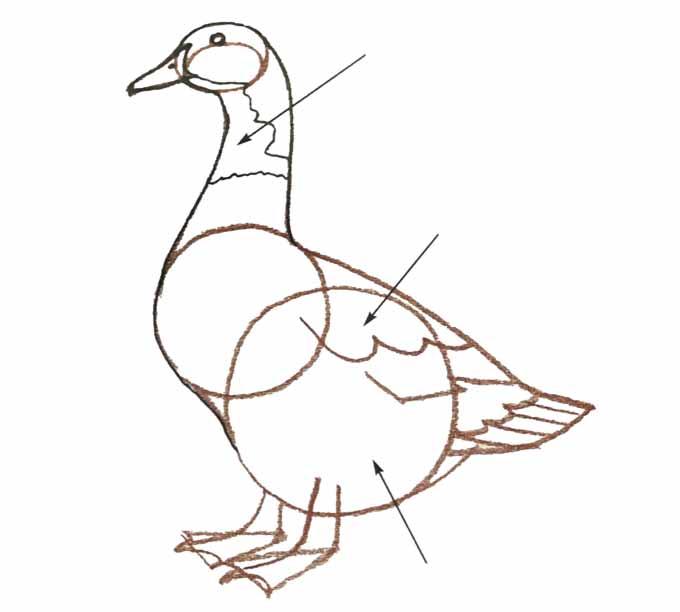 6 Rysowanie kaczki