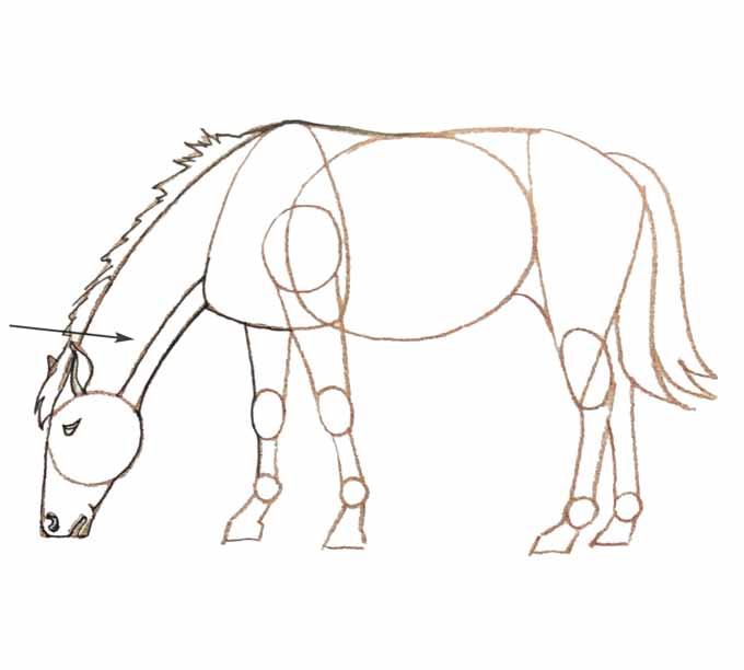6 Rysowanie konia