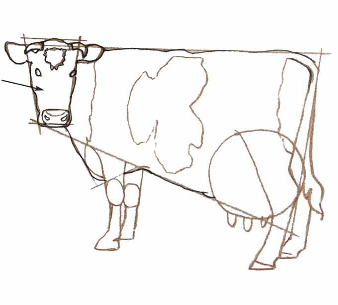 6 Rysowanie krowy