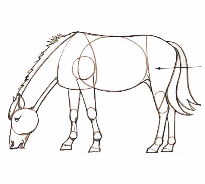 7 Rysowanie konia