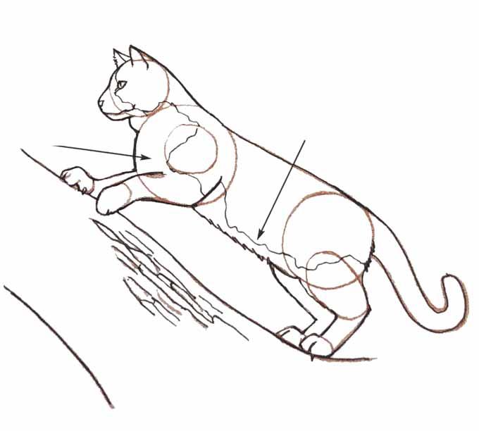 7 Rysowanie kota