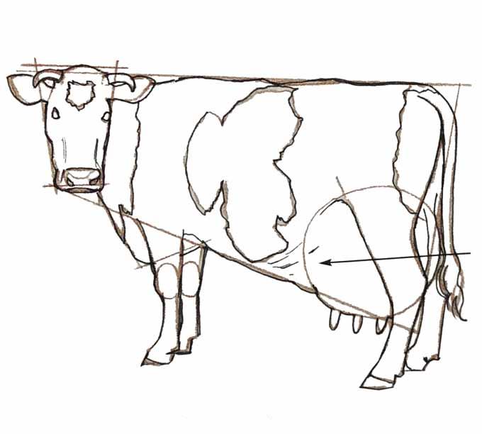 7 Rysowanie krowy