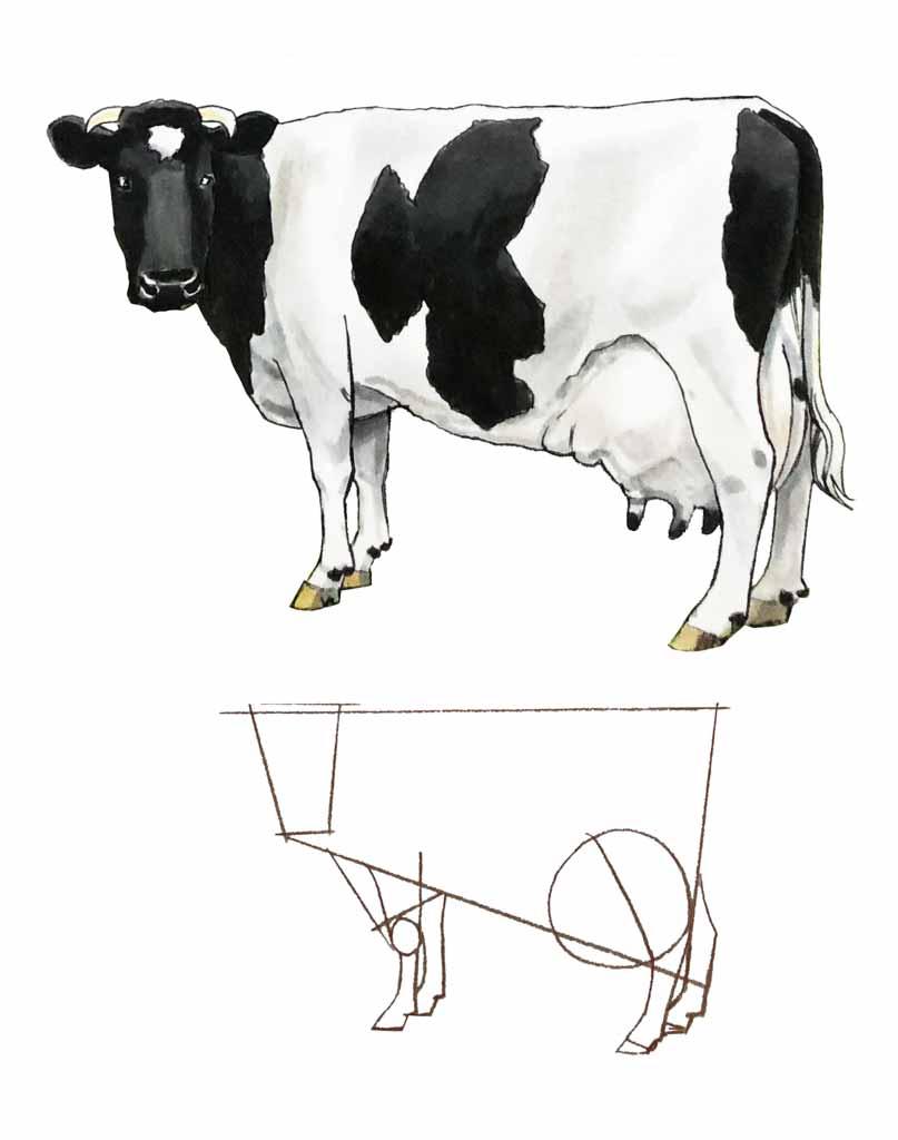 Jak narysować krowę