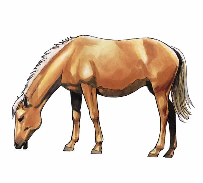 Jak narysować konia?